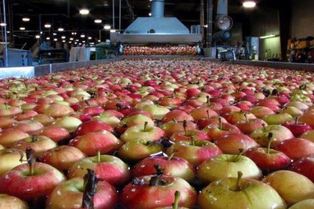 Grupy producentów owoców obawiają się zagranicznych przejęć