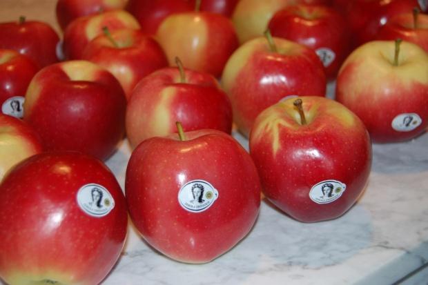 Lidl wprowadza do sprzedaży certyfikowane jabłka grójeckie