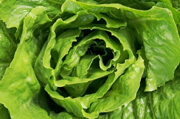 PSOR: Unijna żywność wolna od pozostałości środków ochrony roślin