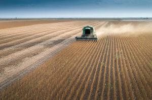 IGC prognozuje rekordową światową produkcję soi