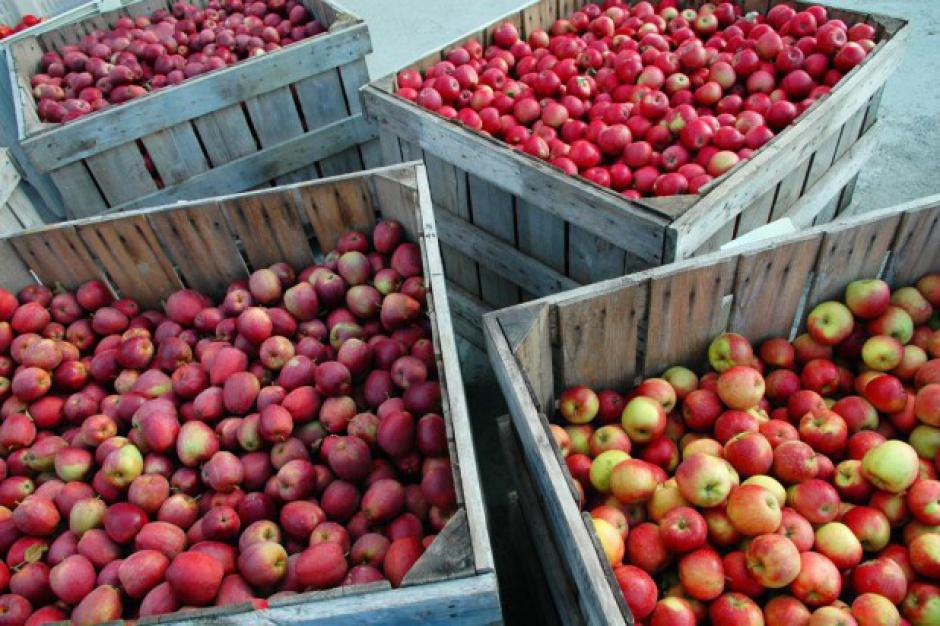Chiny największym producentem jabłek na świecie