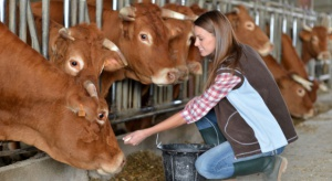 Spadek produkcji mleka na półkuli południowej