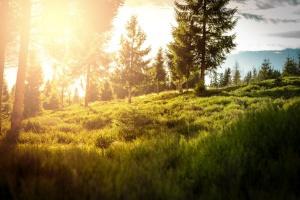 Minister Szyszko: Lasy Państwowe mogą tworzyć miejsca pracy