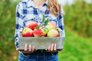 Rosną zapasy jabłek