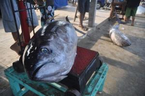 637 tys. dol. za 212 kg tuńczyka na słynnej aukcji w Tokio