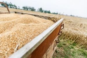Spadła produkcja pszenicy w UE - gdzie najbardziej?