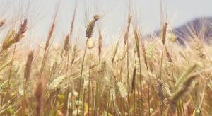 Resort rolnictwa zabiega w UE o podniesienie ceny interwencyjnej zbóż