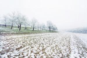 Włoskie rolnictwo traci z powodu ataku zimy