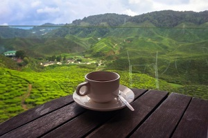 Z herbatą marki Akbar na Sri Lankę
