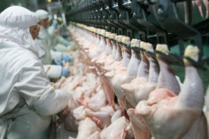 Ptasia grypa w Polsce wpływa na poziom eksportu drobiu i ceny skupu
