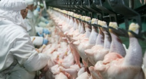Zakaz eksportu drobiu z Polski do krajów pozaunijnych w większości nie taki dotkliwy