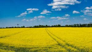 PSPO: Coraz silniejsza korelacja polskich producentów rolnych z krajowymi tłoczniami oleju