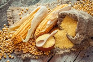 Ukraina: Zebrano 26 mln ton ziarna kukurydzy