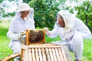 MRiRW powoła zespół doradczy ds. pszczelarstwa