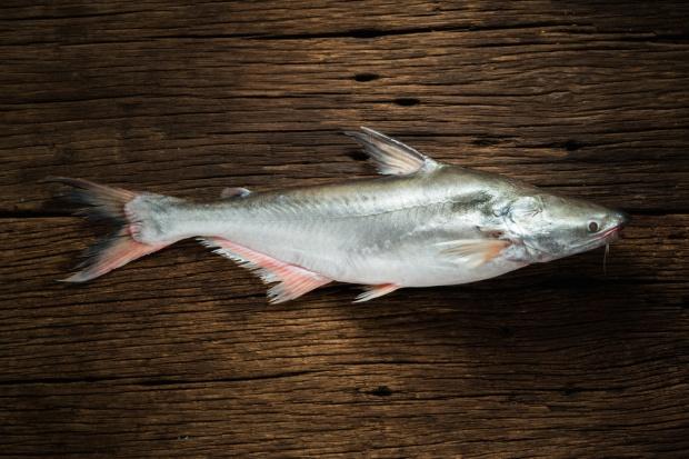 Rekordowy rok w imporcie owoców morza do USA