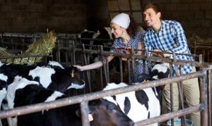 Producenci bydła i trzody chlewnej dostaną 22,6 mln euro pomocy unijnej