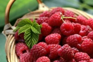 Uprawa owoców jagodowych możliwa w trudnych warunkach? Nad tym pracują naukowcy