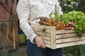 Ceny warzyw w 2016 r. - analiza IERiGŻ