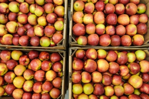 Kraje UE nie chcą polskich jabłek