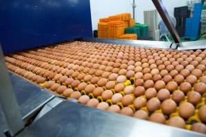 Ptasia grypa nie spowoduje obniżki cen jaj do przetwórstwa