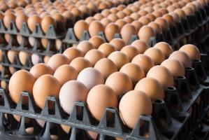 Polska eksportuje coraz więcej przetworów jajecznych