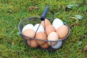 KIPDiP: Wyższa cena jaj z wolnego wybiegu jest sprawiedliwa
