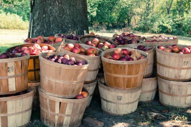 Ewa-Bis: Polskie jabłka mogą stać się pożądanym, niszowym produktem w Indiach