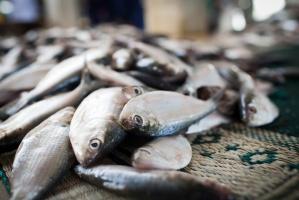 Ujawniono nielegalne przeładunki ryb