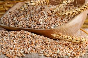 IGC prognozuje większą światową produkcję zbóż