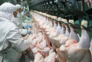 Produkcja drobiu nie zwalnia mimo ptasiej grypy