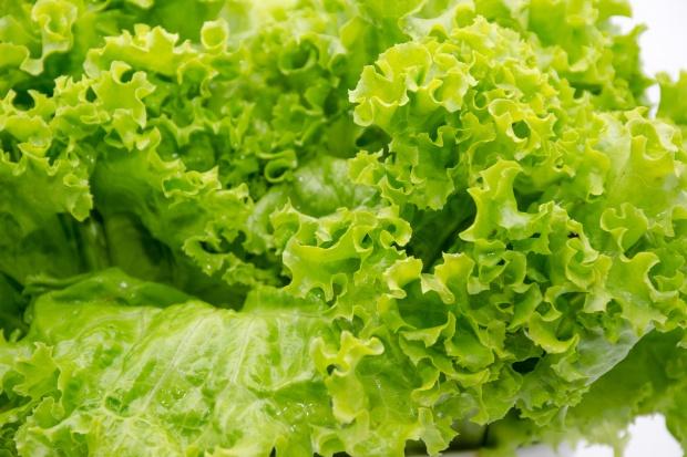 Powstaje komercyjna farma wertykalna do uprawy sałaty bez użycia pestycydów