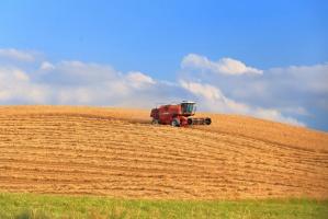 IRG SGH: Poprawia się koniunktura w rolnictwie