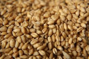 IERiGŻ: Ceny zbóż dalej niskie, zbliżone do zeszłorocznych