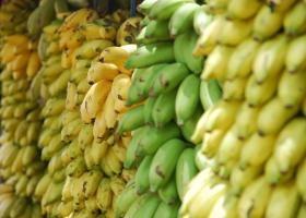 Rynek bananów w UE - dominuje import z państw Ameryki Łacińskiej