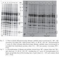 Zdjęcie numer 4 - galeria: Białkowe markery gatunkowe jako potencjalne narzędzie molekularne do kontroli autentyczności produktów orkiszowych