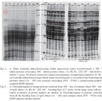 Zdjęcie numer 3 - galeria: Białkowe markery gatunkowe jako potencjalne narzędzie molekularne do kontroli autentyczności produktów orkiszowych