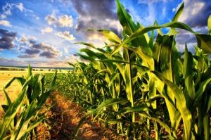 Analitycy prognozują stabilny wzrost globalnego sektora zbożowego do 2025 r.