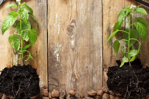 Fructoplant: Elegancko zapakowane drzewka, np. jabłoń, to dobry prezent