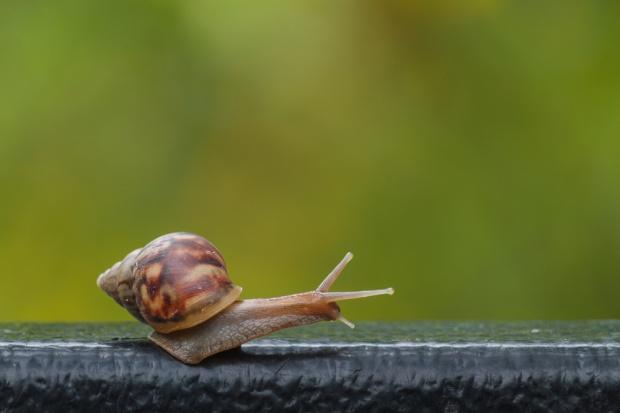Polish Snail Holding poszukuje nowych metod pozyskiwania śluzu ślimaków