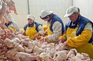 Ukraina coraz poważniejszym rywalem dla polskiego drobiarstwa