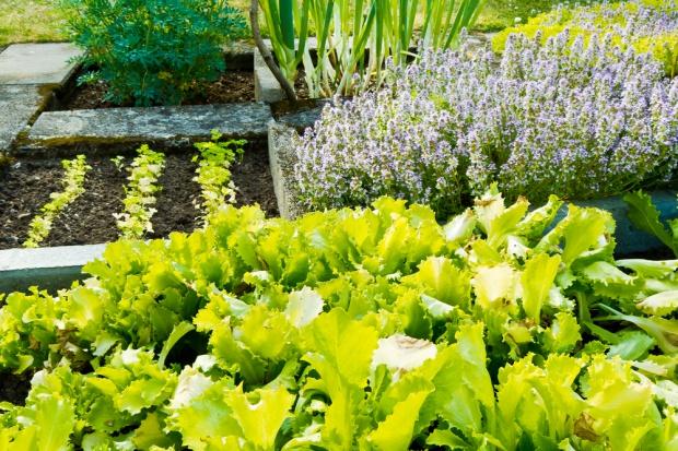 75 ogródków warzywnych na ziemi należącej do Watykanu