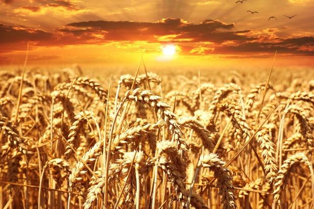 UE: Produkcja zbóż w 2017 r. będzie istotnie wyższa