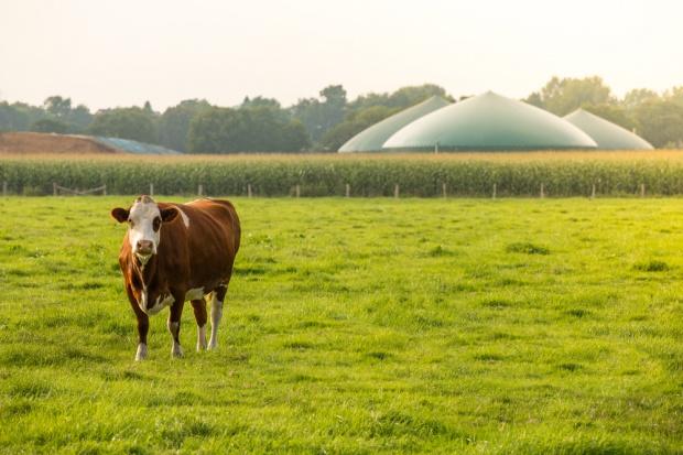 Wsie zaopatrywane w prąd z biogazowni