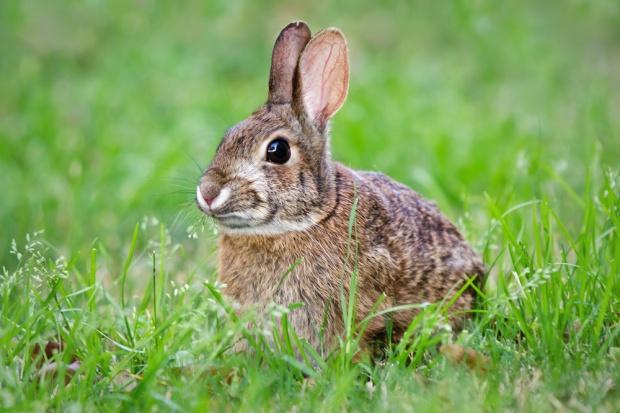 Parlament Europejski za poprawą warunków hodowli królików