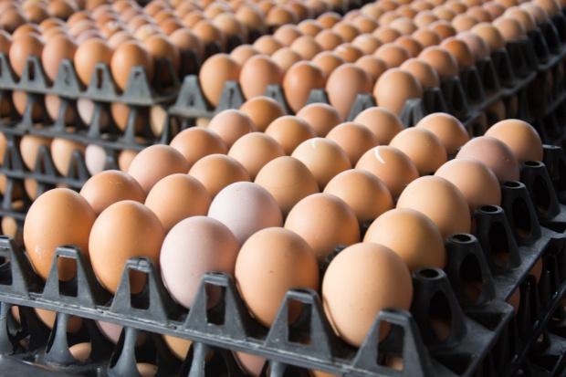 Spada unijny eksport jaj wylÄ™gowych