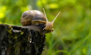 Ślimaki: Co roku Polska sprzedaje za granicę ślimaki za ponad 7 mln zł