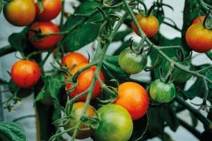 Przetwórstwo owocowo-warzywne: Dobre, bo z Polski