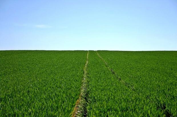 Ministerstwo rolnictwa analizuje funkcjonowanie spółek rolnych