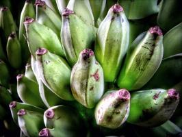 Ponad 11 proc. bananów na unijnym rynku pochodzi z krajów Wspólnoty
