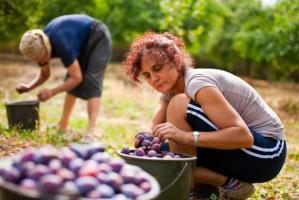 KRIR w sprawie pracy cudzoziemców: Należy zostawić umowy o dzieło